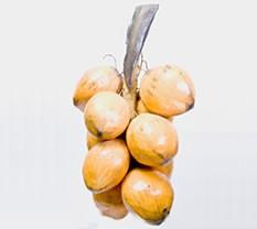 noix de coco en papier mache